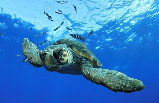 1026335 le festival mondial de l image sous marine 2011 1 1