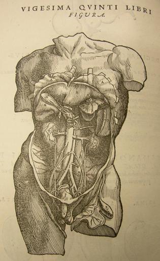 Anatomie10