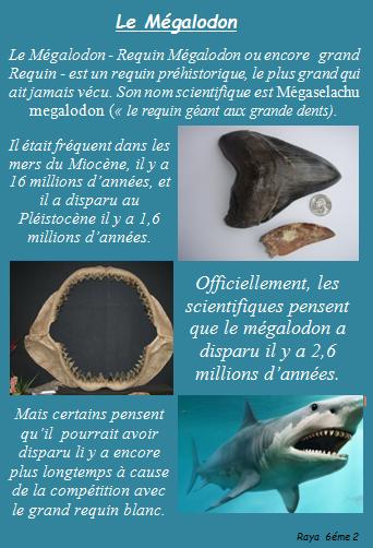 Megalodon 20ranya